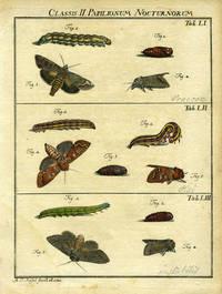 Classis II  Papilionum Nocturnorum