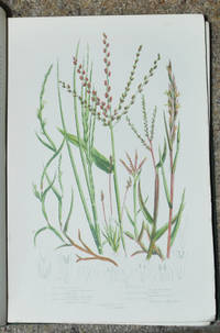 The Grasses, Sedges and Ferns of Great Britain, and their allies the Club Mosses, Pepperworts and Horsetails