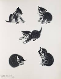 Cats. A Portfolio