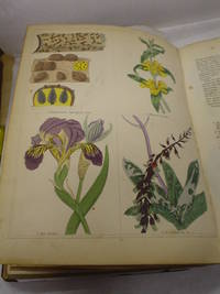 The Magazine of Botany and Gardening  British and Foreign, comprehending  Figures carefully coloured from Nature of Flowers, Fruits and Cryptogamia  with descriptions thereof......Principles and Practise of Cultivation