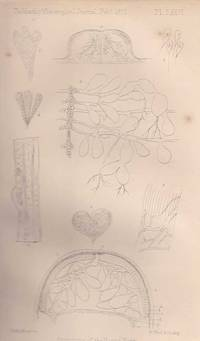 The Anatomy of The Round-worm. (Ascaris lumbricoides, Linn). A rare original article from the...