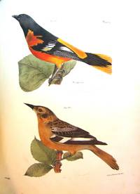 NATURAL HISTORY OF NEW YORK. ZOOLOGY OF NEW YORK, OR THE NEW YORK FAUNA.... PART II. BIRDS
