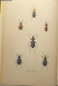 British Beetles: an introduction to the study of our indigenous coleoptera