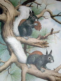 LIMITED EDITION PRINT OF SQUIRRELS 58/250