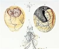 Recherches Anatomiques et Physiologiques sur le Developpement du Foetus et en Particulier sur l