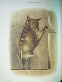 Zoology of Egypt, volume 2: Mammalia.