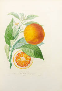 Histoire Naturelle des Orangers