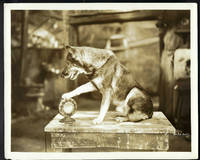 "THE MILLION DOLLAR COLLAR (Original Vintage Photo from the 1929 RIN TIN TIN ""Lost"" Warner Brothers Film)"