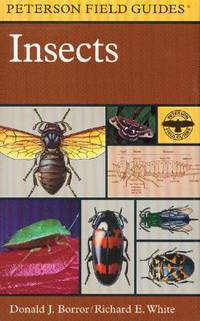 Insects & Spiders book