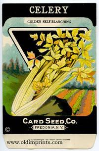 Celery - (Golden self-blanching)