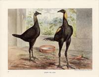 BROWN RED GAME. by LUDLOW) Ludlow, J. W. (illus) - Circa early 1900s.