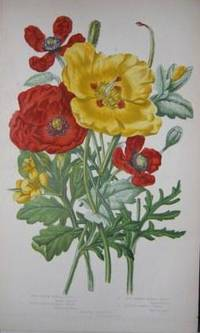 London: Frederick Warne and Co.. Full Cloth. Very Good. N.d., circa 1860s. 315 colored botanical pla...