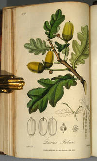 MEDICAL BOTANY: OR, ILLUSTRATIONS AND DESCRIPTIONS OF THE MEDICINAL