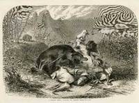 A Pawnee Indian Attacked by Grizzly Bears