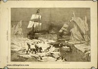 Seal-Hunting in the Northern Seas