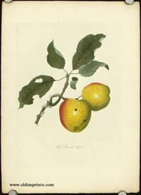The Bennett Apple