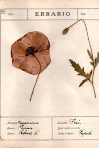 Erbario Herbarium