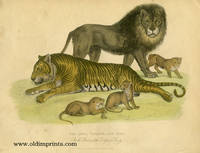 The Lion, Tigress, and Cubs.  In the Gardens of the Zoological Society.