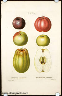 Malus communis. Pommier commun. by  P.  (illus).  Gabriel (engraved by) APPLE) Bessa - Ca. 1801- 1819. - from oldimprints.com and Biblio.com