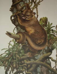 LIMITED EDITION PRINT OF KINKAJOU 242/250