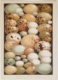 Some Favourite British Birds' Eggs II.