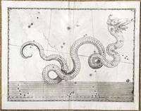 Uranometria … (Single star chart)