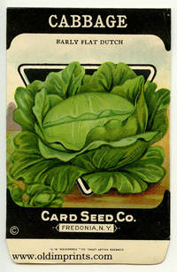 Cabbage (early flat dutch)