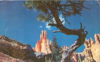 Queen's Garden, Bryce National Park, Utah 1958 used Postcard