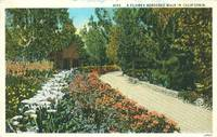 A Flower Bordered Walk in California 1920s used Postcard
