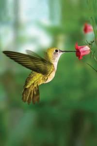 Hummingbird Blank Journal