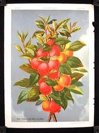 The Strawberry Guava