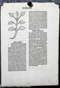 HORTUS SANITATUS INCUNABLE LEAF 1491 TWO WOODCUTS OF HERBS