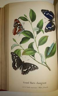 Les Lépidoptères de la Belgique leurs Chenilles et leurs Chrysalides décrits et figurés d'après nature