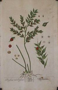Bruscus Ruscus (from A Curious Herbal).