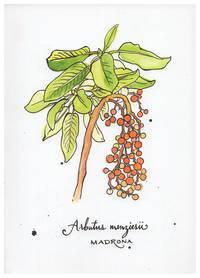 Blank Journal - Madrona Botanical Cover