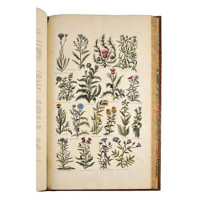 The BritishHerbal: An history of...