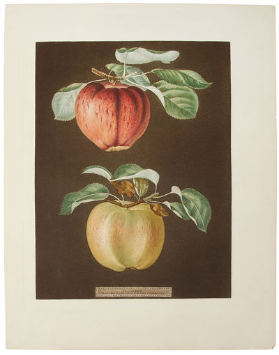 : G. Brookshaw, 1812. Aquatint engraving, with some stipple, printed in colours and finished by hand...