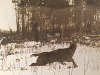1914 Real Photo Postcard of Wild Animal in Snowy Woods