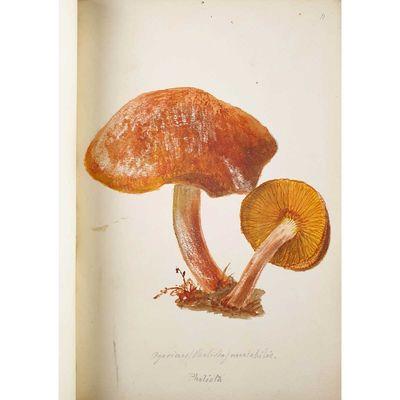 A Fine Watercolour Album of Fungi....