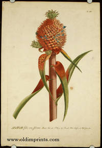 Ananas folio vix ferrato