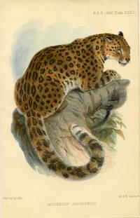 Leopardus Japonensis