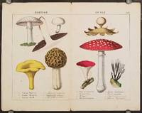 British Fungi. a Common Mushroom.  b Common Chantarelle c Common Morell d Many Cleft Earth Star e Carmine Peziza f Fly Agaric g Flat horned Sphaeria [Double page from The Instructive Picturebook or Lessons from the Vegetable World].