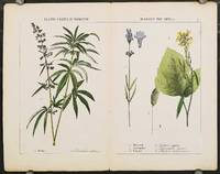 Plants Useful in Domestic Economy, The Arts &c. a. Hemp (Cannabis sativa)  b. Mustard (Sinapis Nigra) c. Lavender (Lavendula spica) d. Canary (Phalaris canariensis).  [Double page from The Instructive Picturebook or Lessons from the Vegetable World].