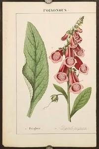 Foxglove.  (Digitalis purpurea).   [Single page from The Instructive Picturebook or Lessons from the Vegetable World].