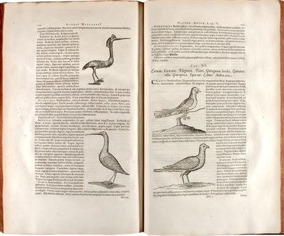 Historia naturalis Brasiliae, ... in...