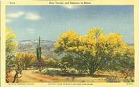 Palo Verdes and Sahuaro in Bloom, Arizona unused linen Postcard