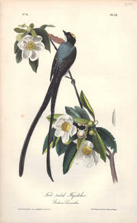 image of Fork-tailed Flycatcher