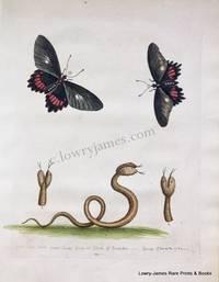 Pl 207 Double-headed Snake & The Black Butterflies
