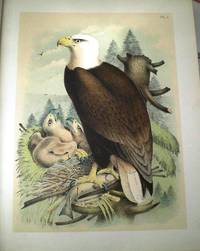 STUDER'S POPULAR ORNITHOLOGY. THE BIRDS OF NORTH AMERICA: DRAWN AND COLORED FROM LIFE and ORNITHOLOGY; OR, THE SCIENCE OF BIRDS. FROM THE TEXT OF DR. BREHM