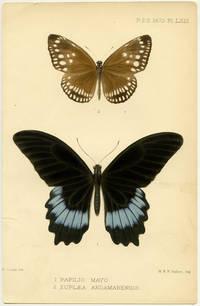 1. Papilio Mayo. 2. Euplaea Andamanensis